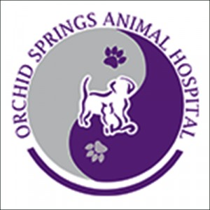 50 Off Veterinary Services