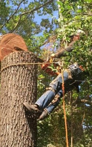 Coles Tree and Mulching Service