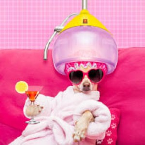Pampered Pet Grooming - Full Groom Special Only 10 Off