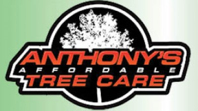 Anthony39 s Affordable Tree Care - Free Stump Grinding With Any Tree Removal