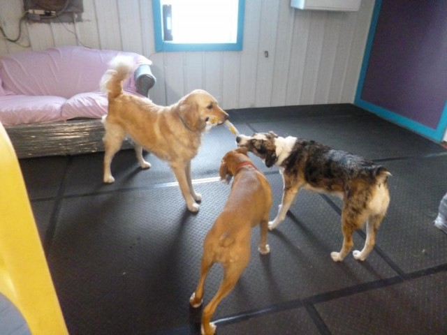 Waggin Tails Training Doggie Day Care
