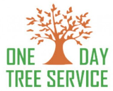 One Day Tree Service - Free Stump Grinding With Tree Removal